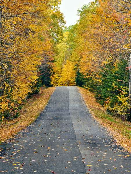 Autumn road in Maine, USA.